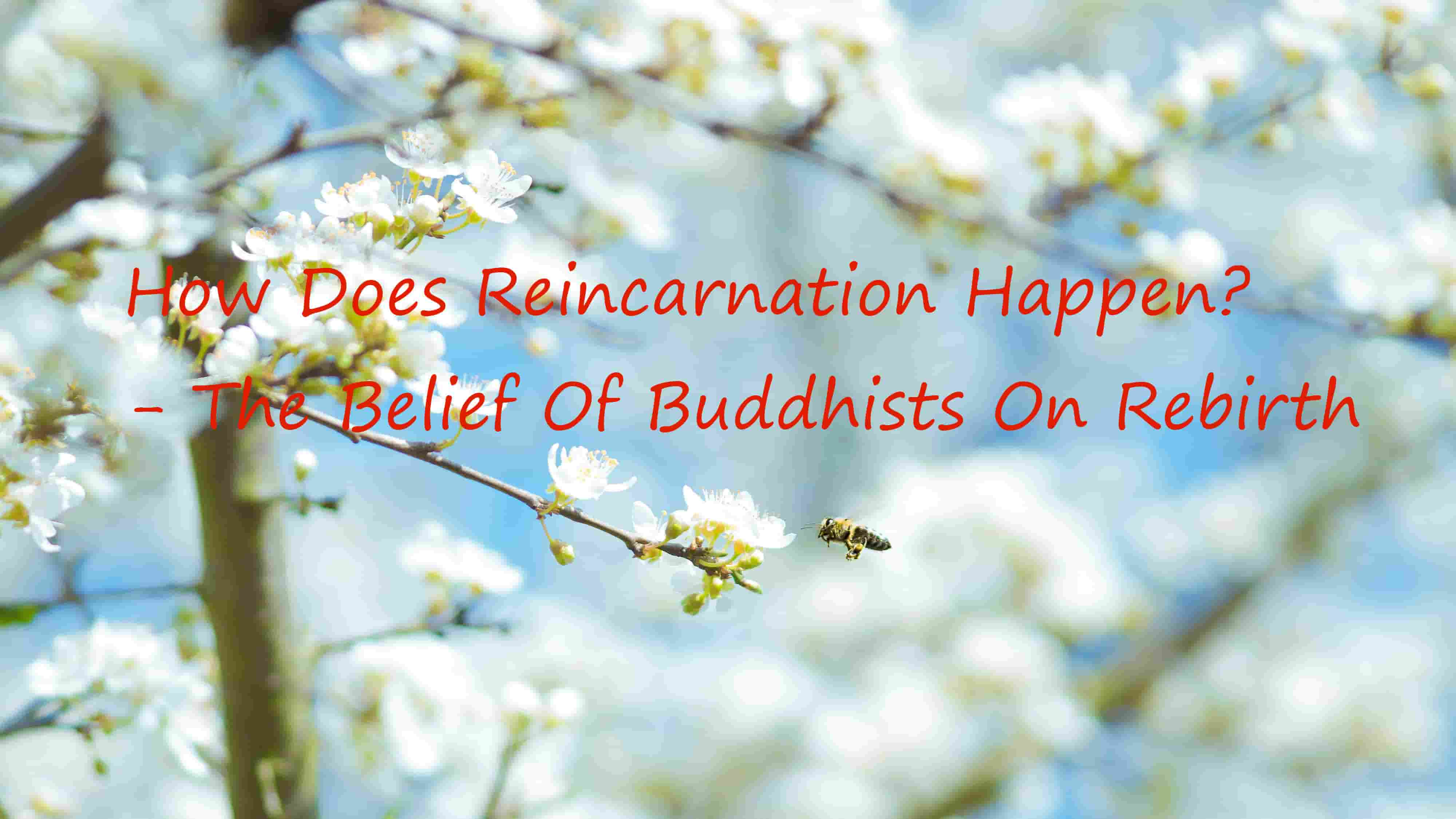 How Does Reincarnation Happen? - The Belief Of Buddhists On Rebirth